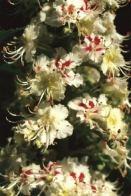 Bach flower remedies mightylinksfo Choice Image